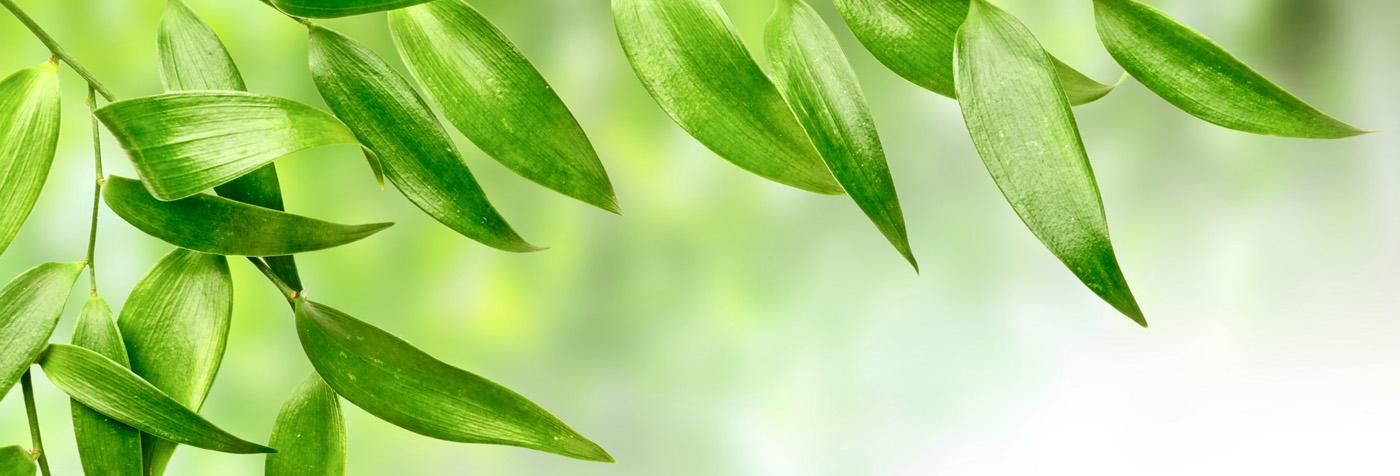 Green_Leaf(2)